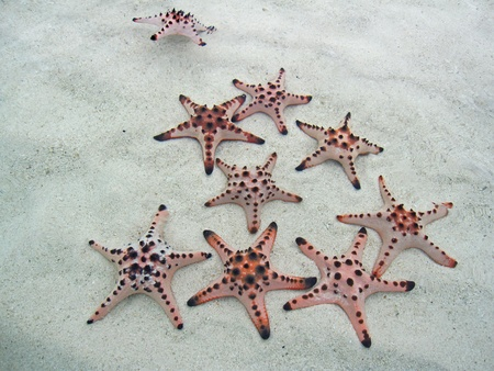 A group of starfish family stay together in the sea  Stock Photo