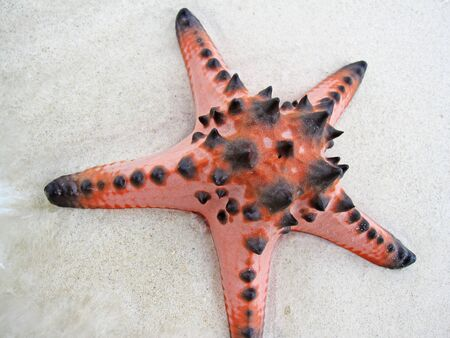 Close up of a beautiful starfish with nice skin color