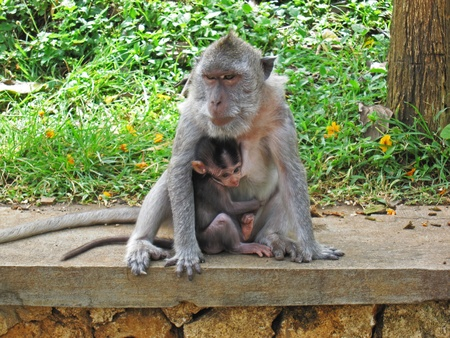 Mom monkey is in the action of protecting her son
