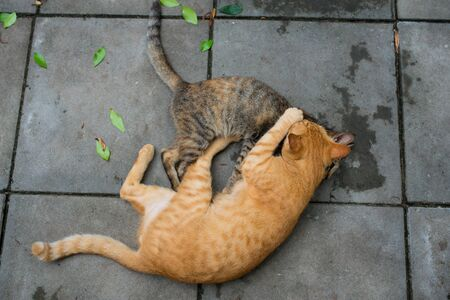cats playing: two cats playing