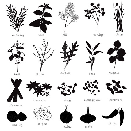 clove of clove: Vector Set of Herbs and Spices