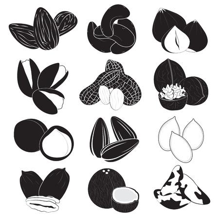 orzechów: Kolekcja orzechów jadalnych