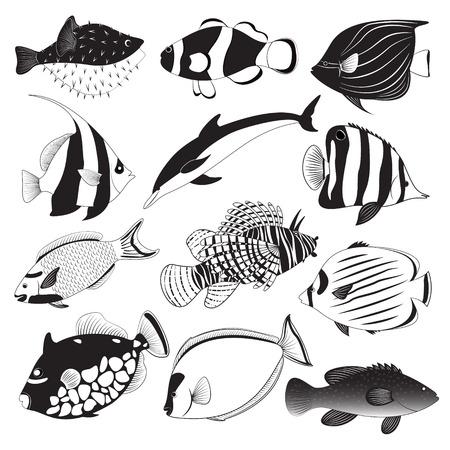 trigger fish: Marine Fish Collection Illustration