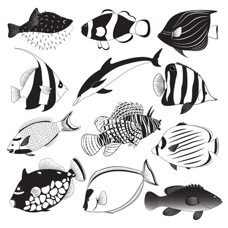 Marine Fish Collection Illustration