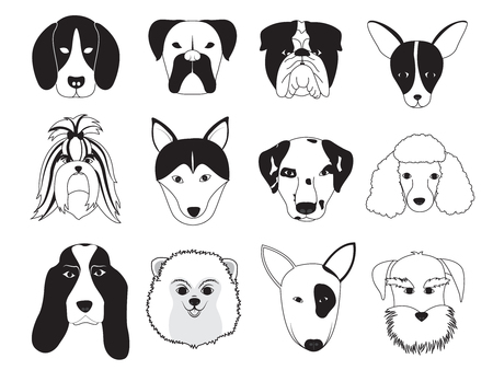 shih: Dogs Breed Collection