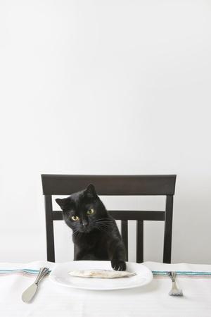 Black cat snatch a fish