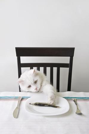 arracher: Chat blanc arracher un poisson