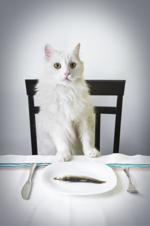 cat eating: Proud cat over fish in a dish Stock Photo