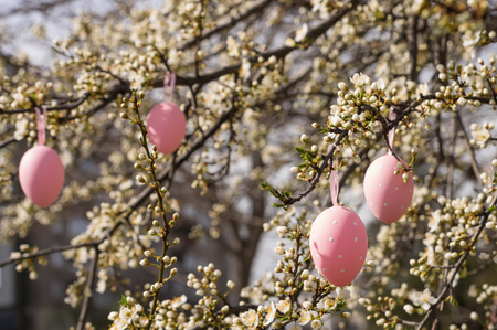 plum tree: Pink easter eggs hanging on a blooming plum tree