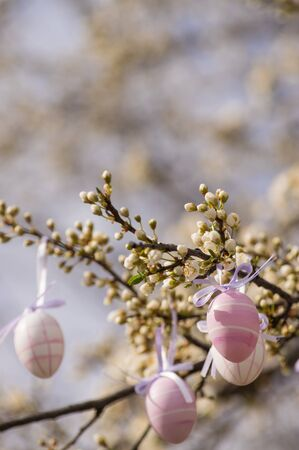 plum tree: Purple easter eggs hanging on a blooming plum tree. Copy space at the top Stock Photo