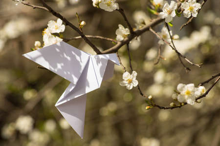 plum tree: White origami dove bird hanging on blooming spring plum tree