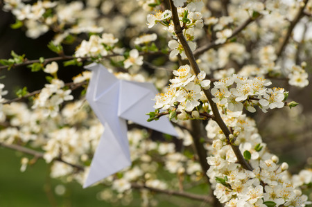 plum tree: White origami dove bird hanging on blooming spring plum tree with variable focus