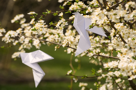plum tree: White origami dove birds hanging on blooming spring plum tree Stock Photo