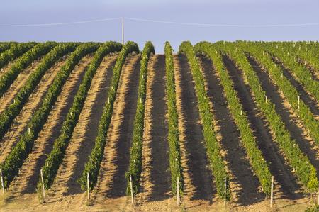 Summer vineyard farm in Abruzo, Italy, Europe Reklamní fotografie