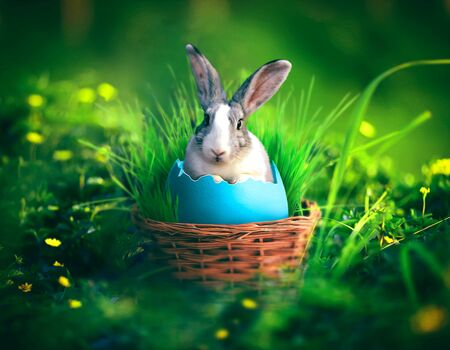 Art of a bunny coming out from an egg. Easter bunny concept. Stock Photo - 135986632