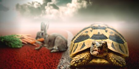 An illustration of a race between a rabbit and a turtle. Despite of being slow, the turtle win the race because the rabbit was distracted and stopped for sometime to eat some carrots in the way. A concept about concentration and focus on your goal to win in life.