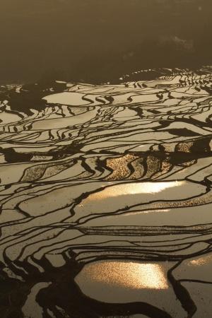 Rice terraces of yuanyang photo
