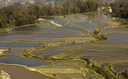 yuanyang: rice terraces of yuanyang, yunnan, china Stock Photo
