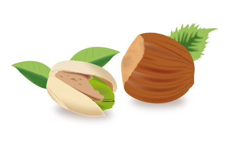 dry fruits Vector