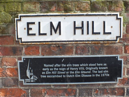 henry: Historical account concerning, Henry the VIII of elm trees being here up until killed of by disease in 1970s