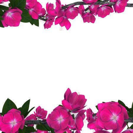 flower   isolated on white background Stock Photo