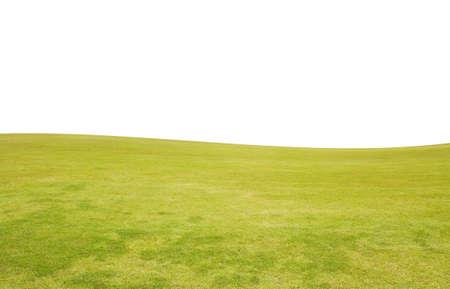 Zielona trawa z białym