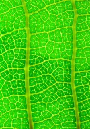 Abstract background   leaf texture photo