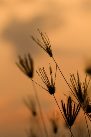 Sunset with dry grass