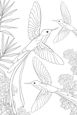 A group of hummingbirds flying on the background with flowers image for adults.A coloring book,page for relaxing activity.Line art style illustration for print.Poster design.