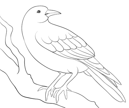 A cute crow on the brunch  image for relaxing activity.A coloring book,page for adults and children.Line art style illustration for print.Poster design. Illustration