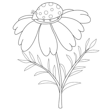 A cute ladybird on the camomile image for relaxing activity.A coloring book,page for children,black and white image.