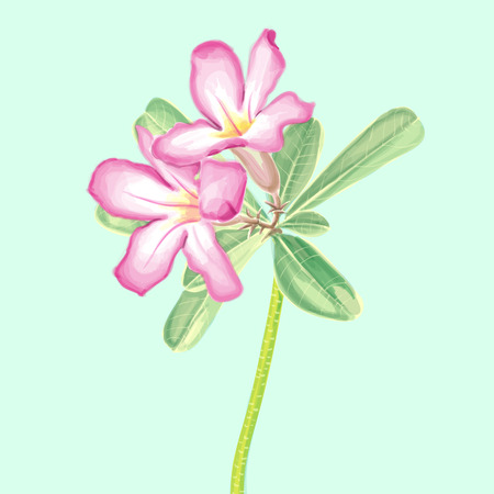 Vector Watercolor Painting of Impala lily