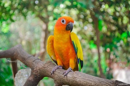 parot: Parrot,bird