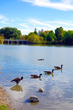 A pond in a park on October 10, 2013 in Toronto photo