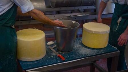 manufactor: Two cheese makers who are cleaning fresh cheese ready for the moulding process