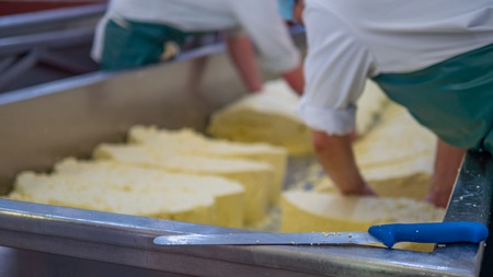 manufactor: Two men begin to make blocks of cheese in a factory