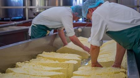 Deux hommes commencent à faire des blocs de fromage dans une usine Banque d'images - 57249941