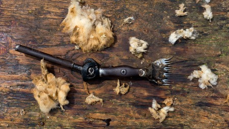 clippers: old fashion sheep shearing clippers on wooden background
