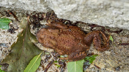 Brown Toad enjoying the wet Stock Photo