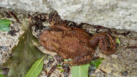 Brown Toad genießt die nasse Standard-Bild - 81279041