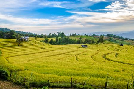 黄金の田んぼと山の風景の小屋のテラス。田んぼは晴れた日の明るく青い空と Pa ピンポン ピアン、チェンマイ、タイの棚田。
