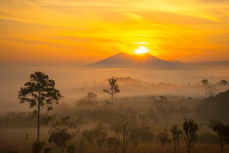 Dramatic fog, sunrise with beautiful vivid and romantic golden sky at Thung Sa Lang Luang, between Phitsanulok and Petchabun, Thailand.