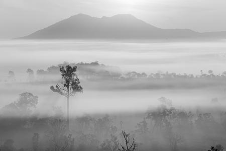friendless: Dramatic fog, sunrise with isolated sky at Thung Sa Lang Luang, between Phitsanulok and Petchabun, Thailand. Gray mood and tone. Stock Photo