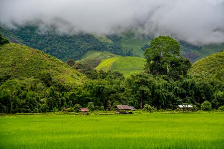 Mooi groen padieveld en hut in dorp met mistige bergachtergrond. Het landschap van het groenpadieveld in Saphan-dorp, Nan, Thailand