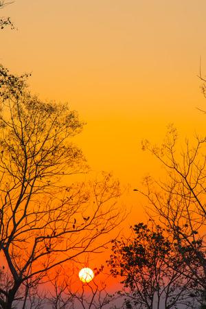 Silhouet van droge boom met prachtige zonsopgang op de berg. Romantisch dageraadlicht met exemplaarruimte.