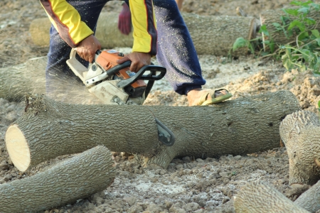 lumberman: The chainsaw cutting the log of wood