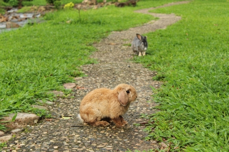 Two rabbits on the pathway Stock Photo