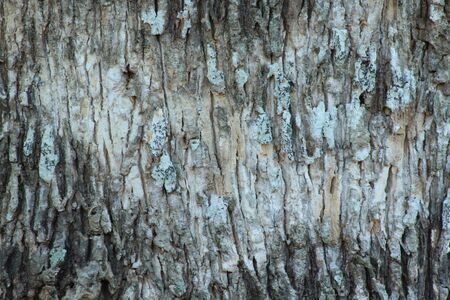 Tree bark texture Stock Photo - 17996910