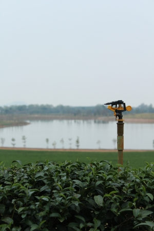 Sprinkler on tea field photo