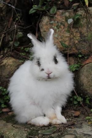 White rabbit photo